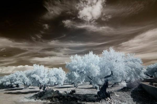 Reed-Romanticism-2-600x399